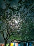 掩藏在树后的月亮 免版税库存图片