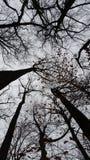 掩藏在树梢下 免版税库存图片