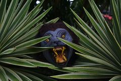 掩藏在植物后的狼人 免版税库存照片