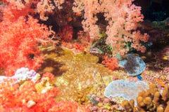 掩藏在珊瑚的石斑鱼 免版税库存图片