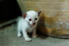 掩藏在瓶子的白色猫 免版税图库摄影