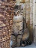 掩藏在篮子后的猫的画象 免版税图库摄影