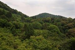 掩藏在绿色后的清水寺寺庙的塔在小山生叶在京都附近 免版税图库摄影