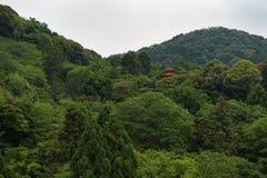 掩藏在绿色后的清水寺寺庙的塔在小山生叶在京都附近 库存照片