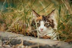 掩藏在草的猫 免版税库存图片