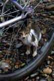 掩藏在轮子后的嬉戏的猫 库存图片