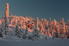 掩藏在雪之间 免版税库存照片
