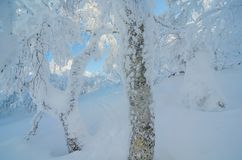 掩藏在雪森林 库存照片