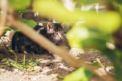 掩藏在绿色叶子后的逗人喜爱的灰色小猫 免版税图库摄影
