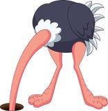 掩藏它的头的驼鸟动画片在孔 免版税库存图片