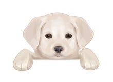 掩藏由空白的逗人喜爱的小狗传染媒介。 免版税库存图片
