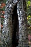 掩藏的地方在自然凹陷 免版税库存照片