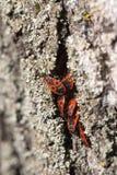 掩藏的昆虫,特写镜头 库存图片