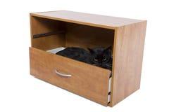 掩藏的猫 免版税库存图片
