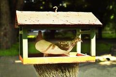 掩藏从太阳的两只鸠在饲槽 免版税图库摄影