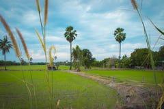 措施在泰国土地3 库存图片