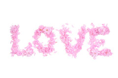 措辞从桃红色瓣和花组成的爱 库存图片