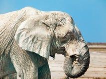 描出一头老非洲大象的画象,埃托沙国家公园,纳米比亚,非洲 库存图片