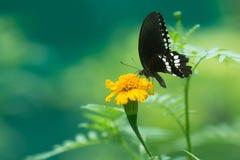 描出观点的在花的一只美丽的蝴蝶 免版税库存照片