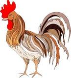 描述一只色的雄鸡的例证 向量 免版税库存图片
