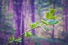 描述树brunc的一个宏观春天视图的水平的照片 免版税库存照片