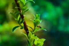 描述树brunc的一个宏观春天视图的水平的照片 图库摄影
