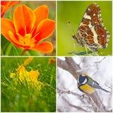 季节的颜色 库存图片