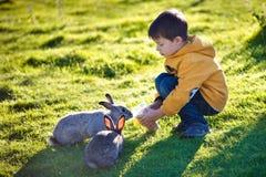 提供二只兔子的小男孩在农场 库存照片