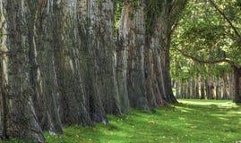 提供树荫的树在哥伦比亚小山国家公园 库存图片