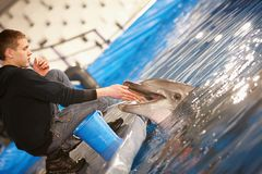 提供的海豚 免版税库存照片