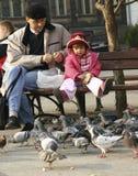 提供的鸽子 图库摄影
