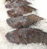 提供鲜鱼变冷了与被击碎的冰在渔场鱼市上 免版税库存图片