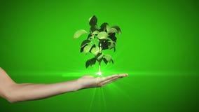 提出数字式绿色植物生长的手 库存图片