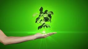 提出数字式绿色植物生长的手 库存照片