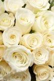 提取乳脂玫瑰 免版税库存图片