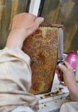 提取新鲜的蜂蜜的老蜂农从与刀子工具的一个蜂窝 免版税库存图片