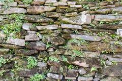 提取有植被背景纹理的被风化的石砖墙,岩石,石头,背景,摘要,黑色,墙壁,表面, o 免版税库存照片