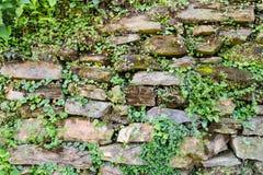 提取有植被背景纹理的被风化的石砖墙,岩石,石头,背景,摘要,黑色,墙壁,表面, o 免版税库存图片
