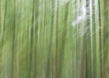 提取森林 免版税图库摄影