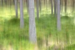 提取模糊的森林场面 免版税库存照片
