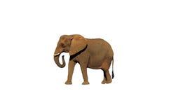 提取的1头大象 库存图片