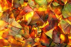 提取秋天背景叶子 库存照片