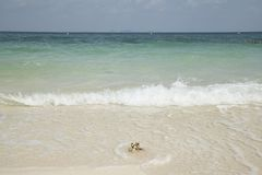 提取背景美好的蓝色cloudscape金黄海洋沙子海运春天夏天日落 免版税库存图片