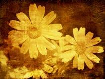 提取背景花卉grunge 免版税库存照片
