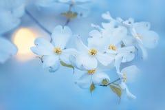 提取花卉背景 库存图片