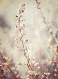 提取花卉背景 库存照片