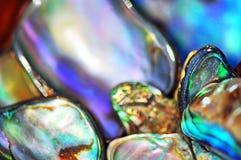 提取被弄脏的背景生动的明亮的颜色鲍鱼paua壳 免版税库存图片