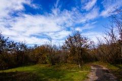提契诺州公园  库存图片