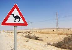 提防骆驼 免版税库存图片