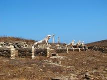 提洛岛石狮子  库存照片